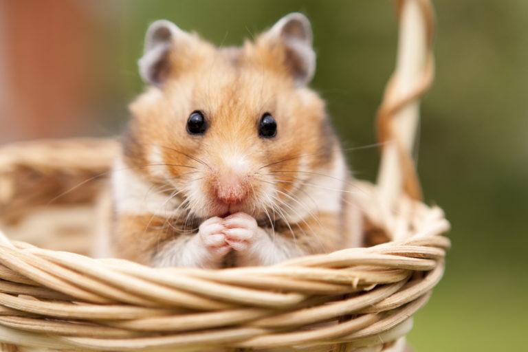 Hamster scénario jeu de roles